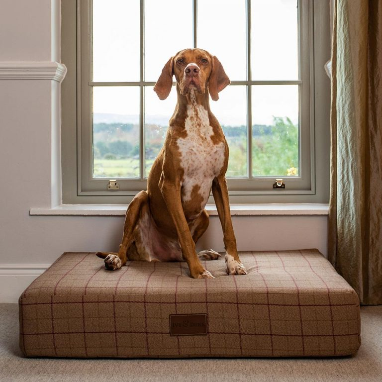 Large Size Fabric Muttress In Heather