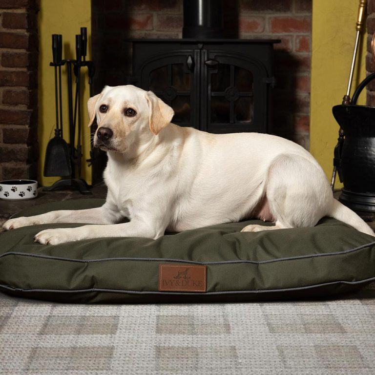 Large Size Waterproof Pedigree In Olive
