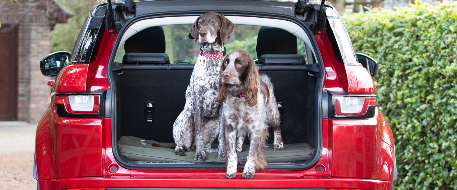 An English Pointer and Springer Spaniel standing in the boot of a car on an Ivy and Duke waterproof dog travel mat.