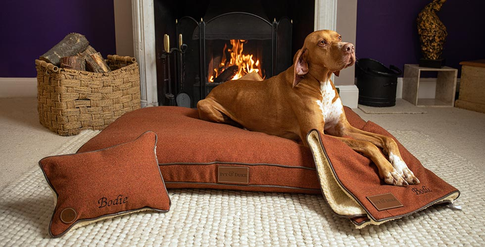 English Pointer lying on a fabric bed with a sheepskin dog blanket and pillow in front of an open fire