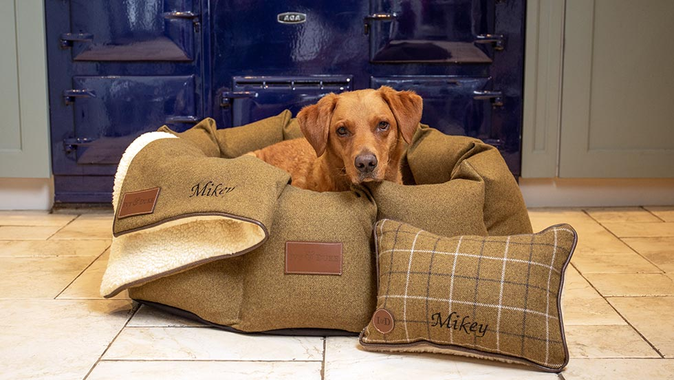 Red Fox Labrador sitting in a fabric den beds with a personalised sheepskin blanket and pillow in front of the aga