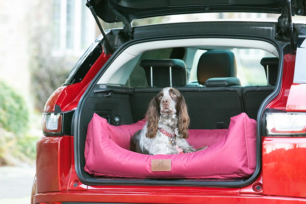 Spaniel sitting looking out of a large waterproof bed in the back of an estate car