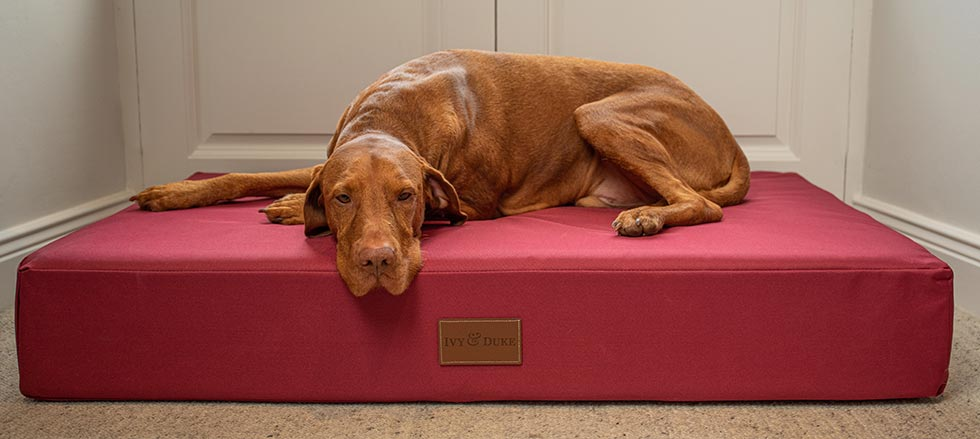Vizsla lying on a large red waterproof dog bed in front of a doorway